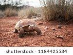 sonoran desert tortoise ... | Shutterstock . vector #1184425534