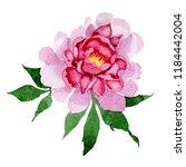watercolor pink peony flower.... | Shutterstock . vector #1184442004