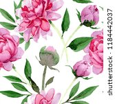 watercolor pink peony flower.... | Shutterstock . vector #1184442037