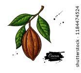 cocoa branch vector superfood... | Shutterstock .eps vector #1184474524