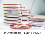 working table with biological... | Shutterstock . vector #1184644324