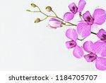 embossed  orchid on white... | Shutterstock . vector #1184705707