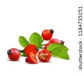 beautiful fragrant rosehip.... | Shutterstock .eps vector #1184735251