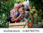 grandfather son and grandson... | Shutterstock . vector #1184783791