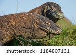 close up portrait of komodo... | Shutterstock . vector #1184807131