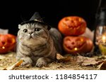 Stock photo halloween cat with hat 1184854117