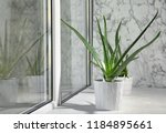 Potted Aloe Vera Plant On...