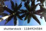 coconut tree in the blue sky in ... | Shutterstock . vector #1184924584