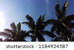 coconut tree in the blue sky in ... | Shutterstock . vector #1184924587