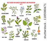 best herbs for cancer treatment ... | Shutterstock .eps vector #1185080671