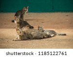 cats and kittens are sunbathing ... | Shutterstock . vector #1185122761