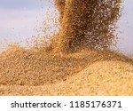 pouring soy bean grain into... | Shutterstock . vector #1185176371