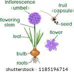 parts of plant. morphology of... | Shutterstock .eps vector #1185196714