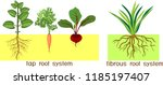 plants with different types of... | Shutterstock .eps vector #1185197407
