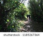 two people walking along a path ... | Shutterstock . vector #1185267364
