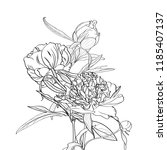 peonies line bouquet isolated... | Shutterstock .eps vector #1185407137