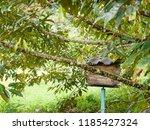 garden in southen thailand   Shutterstock . vector #1185427324