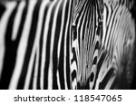 zebra black and white pattern texture - stock photo