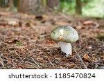 russula aeruginea   edible...   Shutterstock . vector #1185470824