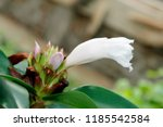 beautiful cone shaped white... | Shutterstock . vector #1185542584