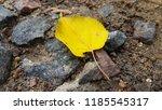 Single Yellow Leaf Closeup....