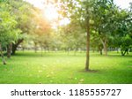 blur park with sun light... | Shutterstock . vector #1185555727