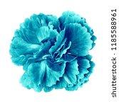cyan cerulean carnation flower... | Shutterstock . vector #1185588961