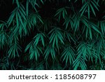 bamboo leaves in dark green... | Shutterstock . vector #1185608797