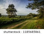footpath in ashdown forest | Shutterstock . vector #1185685861
