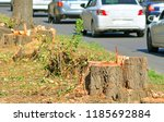 felling trees in the city | Shutterstock . vector #1185692884
