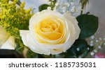 bouquet of fresh flowers | Shutterstock . vector #1185735031