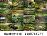 set of photos with green moss... | Shutterstock . vector #1185765274