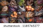 tree mushrooms  autumn colors ... | Shutterstock . vector #1185765277