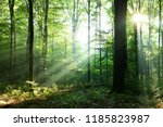 morning in the forest | Shutterstock . vector #1185823987