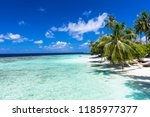 sea of the beautiful coral reef ... | Shutterstock . vector #1185977377