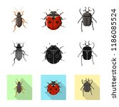 vector design of insect and fly ... | Shutterstock .eps vector #1186085524