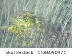 beautiful weeds. blurry picture ... | Shutterstock . vector #1186090471