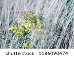 beautiful weeds. blurry picture ... | Shutterstock . vector #1186090474