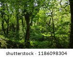 lush english forest.  | Shutterstock . vector #1186098304