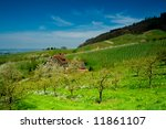Vineyard in Schwarzwald, Germany, in spring time - stock photo