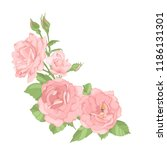 roses. perfect for background... | Shutterstock .eps vector #1186131301