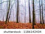 autumn forest mist background.... | Shutterstock . vector #1186142434
