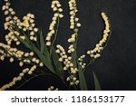 pressed and dried summer spring ... | Shutterstock . vector #1186153177