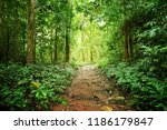 competition of forest trees to... | Shutterstock . vector #1186179847