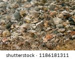 the beautiful seabed | Shutterstock . vector #1186181311