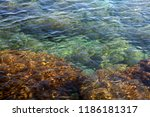 the beautiful seabed | Shutterstock . vector #1186181317