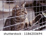 abandoned cat behind the fence...   Shutterstock . vector #1186203694