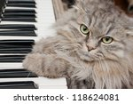 Stock photo cat pianist 118624081