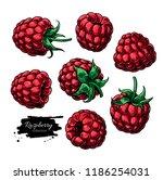 raspberry vector drawing.... | Shutterstock .eps vector #1186254031