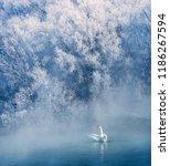 xinjiang yili swan spring...   Shutterstock . vector #1186267594